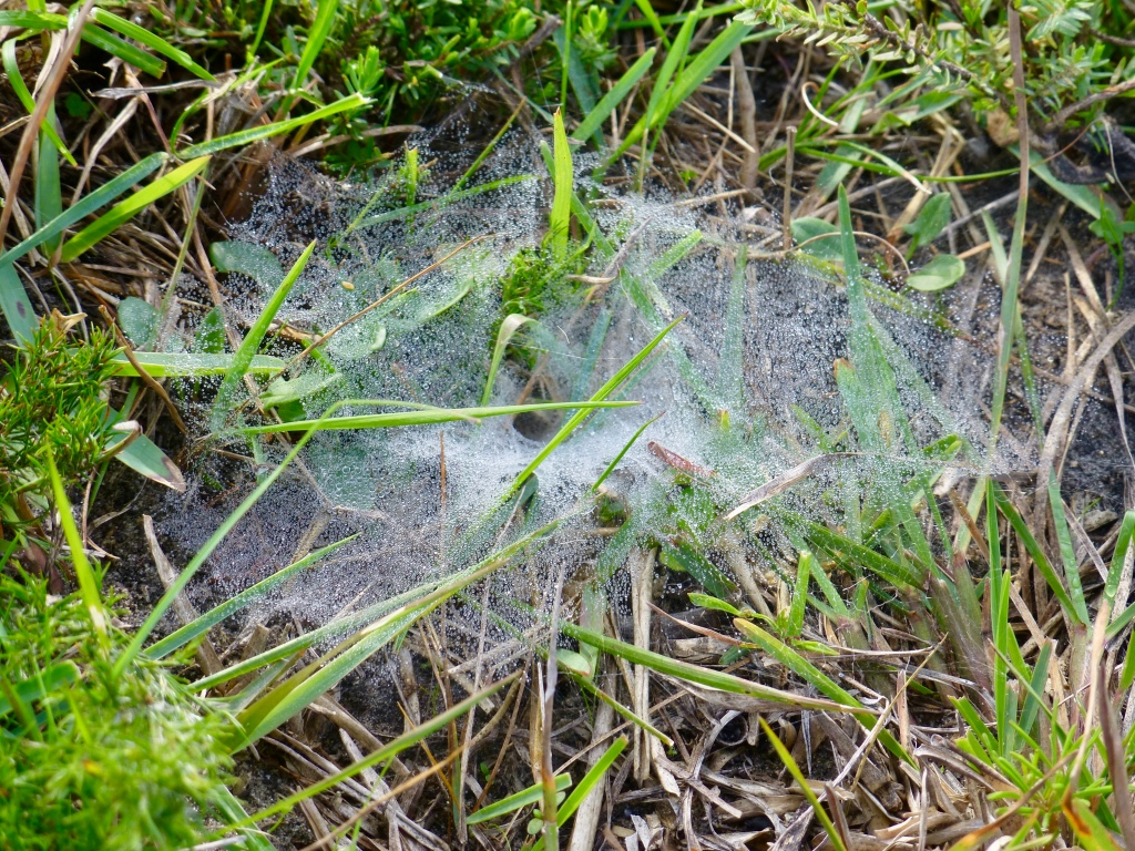 funnelweb